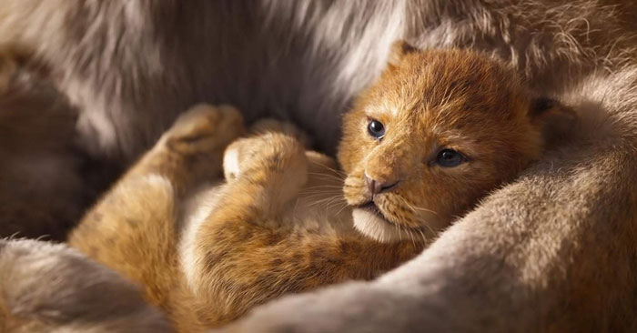 Meet Bahati The Cub, The Adorable Model For Simba In The Lion King Remake