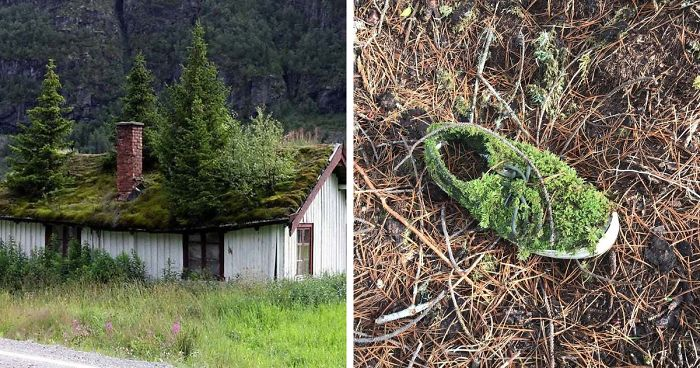 59 Photos Of Nature Winning The Battle Against Civilization (New Pics)