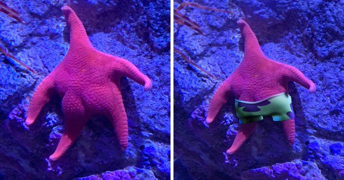 Someone Finds A Patrick-Lookalike Starfish At An Aquarium, Inspires A Funny PS Battle (20 Pics)