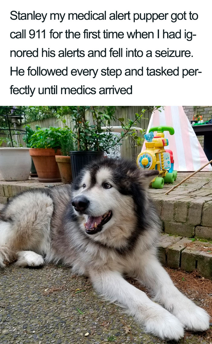 Wholesome-Dog-Posts