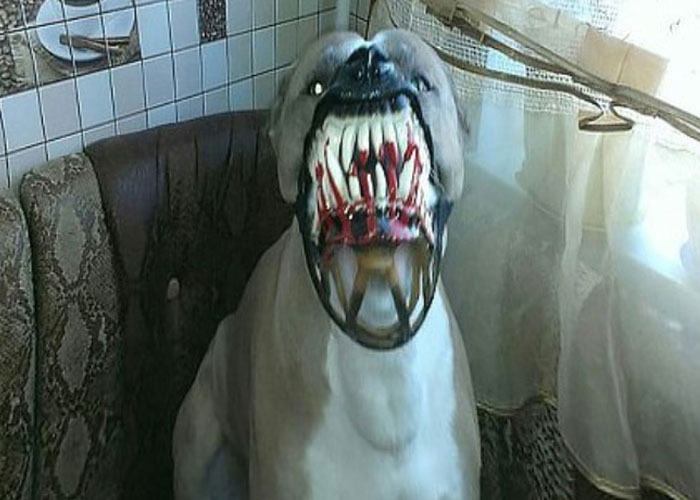 Scary-Dog-Muzzle-Werewolf