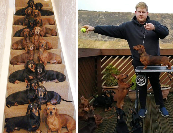 This Teenager Got A Perfect Shot Of His 16 Dachshunds After A Friend Told Him It's Impawsible