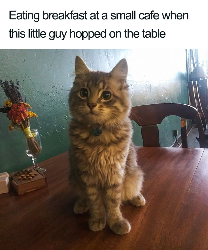 Wholesome-Cat-Posts