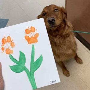 20 Reconfortantes memes sobre perros que te alegrarán el día (Nuevas imágenes)