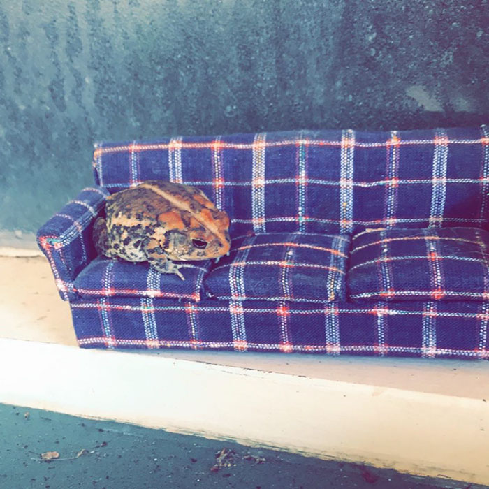 Woman Photographs Her Toad Doing Things In Her Dollhouse And People Love It (8 Pics)