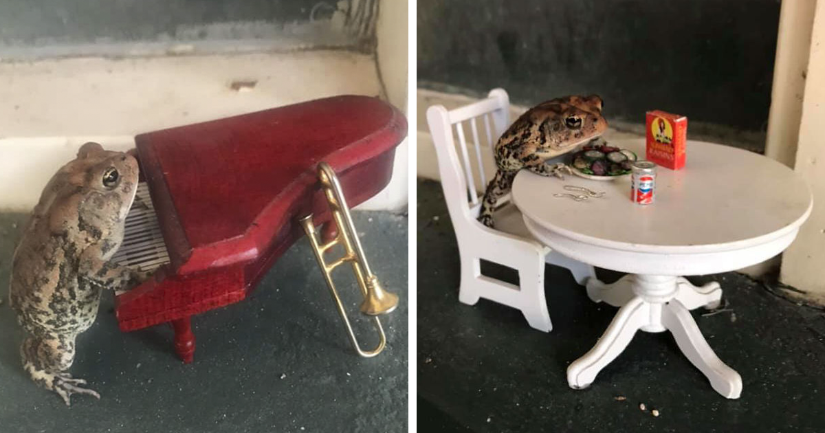 Woman Posts Pics Of Her Toad Doing Things And People Love It So Much They Want It's Own Facebook Page