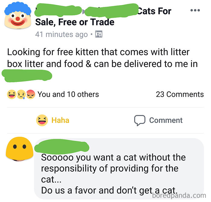 He Is Always Asking For People To Help Pay For Rent And Bills. He Complains About Not Being Able To Afford Food... But He Thinks He Can Care For A Kitten...