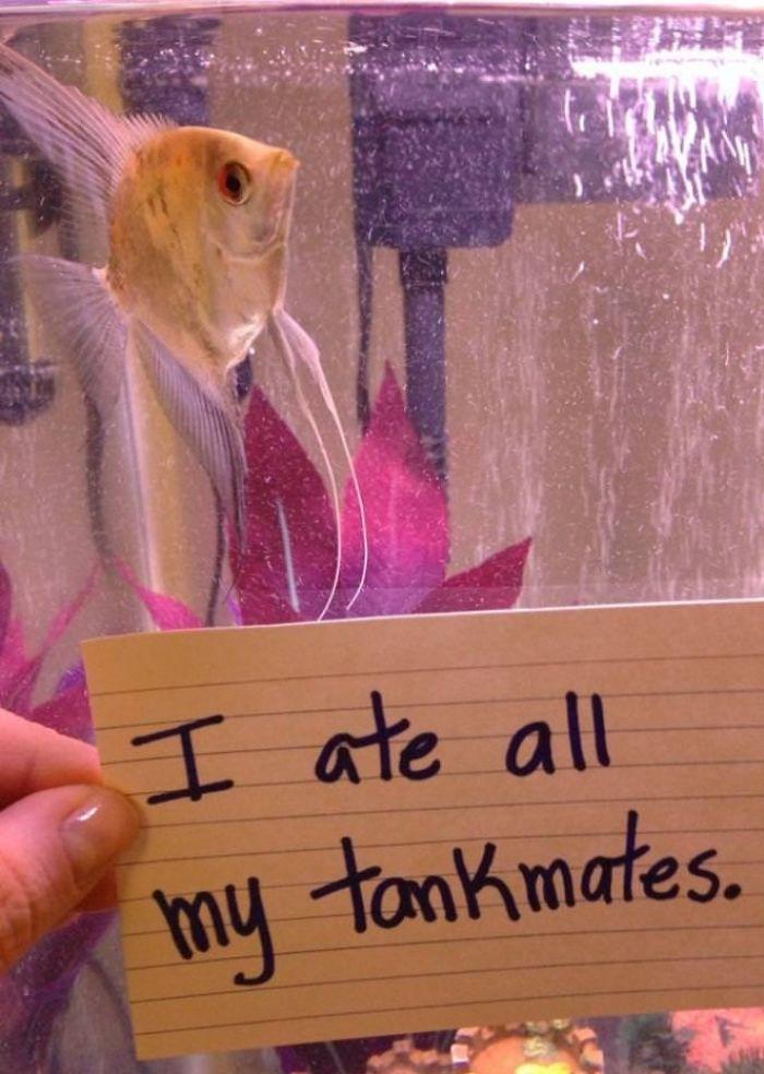 Me he comido a todos mis compañeros de acuario