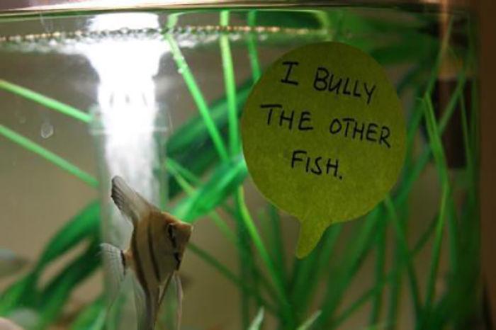 Maltrato a los otros peces