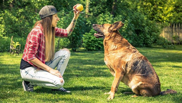 10 Fun, Impressive Tricks You Can Teach Any Dog