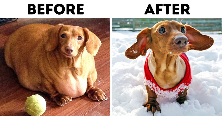 10 Safe Ways To Shed Pounds Off Your Pet and Why It's So Important