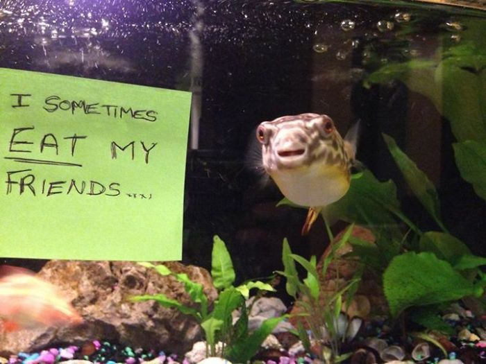 Funny-Fish-Shaming