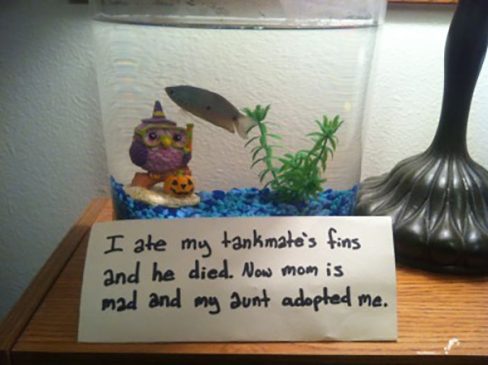 Funny-Fish-Shaming