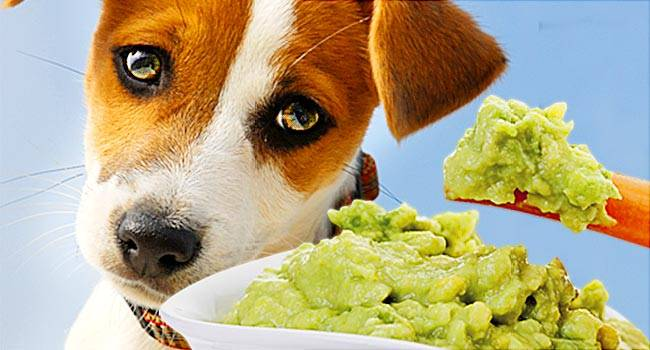 13 Foods Dogs Can't Eat So You Know How to Keep Your Pet Safe