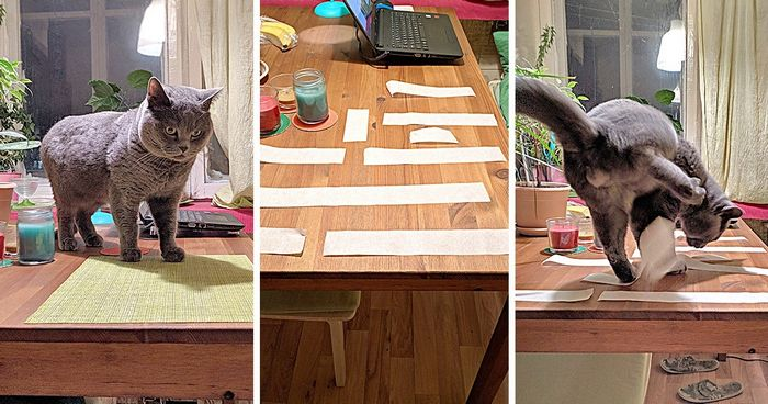 14 Awesome Life Hacks That Can Make Cat Owners' Lives Easier