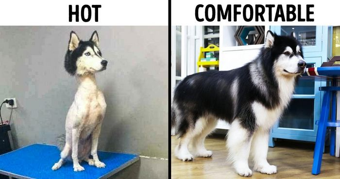 14 Popular Dog Myths It's Time We Stopped Believing