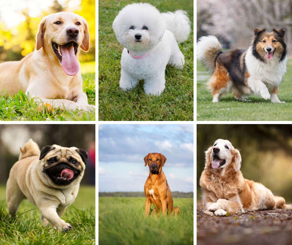 16 of the Best Dog Breeds for Kids and Families