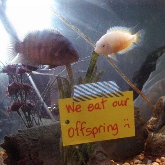 Nos comemos a nuestros hijos :(