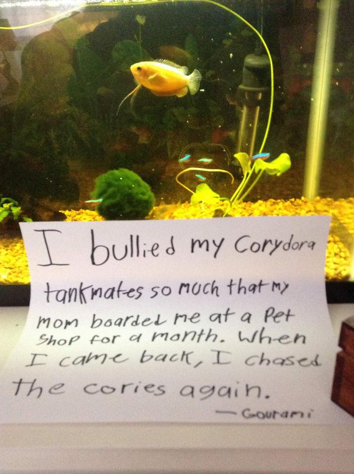Trataba mal a los compañeros de acuario, tanto, que mi dueña me llevó un mes a una tienda de animales. Cuando volví, me dediqué a volver a perseguirlos