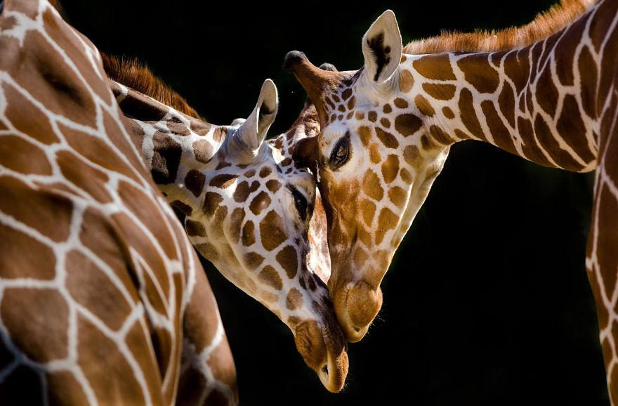 These 20 Photos I Make To Show People The Beauty Of Animals
