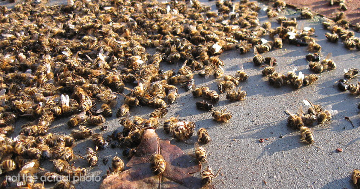 500 Million Bees Have Already Died In Brazil Within Three Months And The Future Of Our Food Is In Question