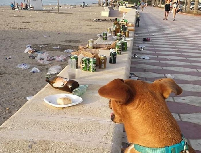 Dogs Are Not Allowed On Beach Due To Possibility That They Might Make A Mess
