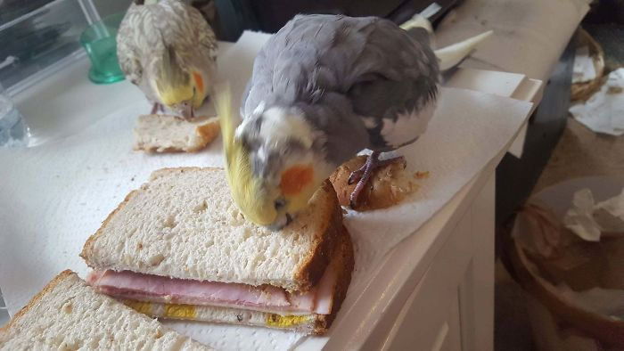 This Adorable Little Asshole Eating My Sammich While Standing On The Goddamn Piece Of Bread I Gave Him