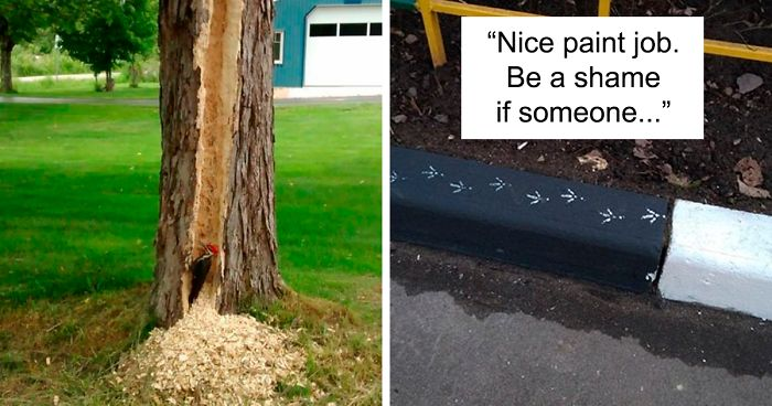 78 Times Birds Acted Like Such Jerks, People Had To Shame Them On The Internet