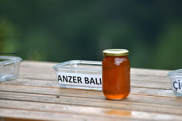 After Bears Kept Coming To This Man's Bee Farm To Steal Honey, He Decided To Turn Them Into Honey Tasters