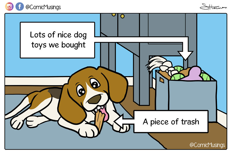 Why Bother Buying Dog Toys When The Dog Prefers Trash??