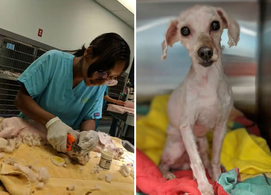 Dog Lives Under A Bed For Two Years, But Is Saved And Gets Life-Changing Makeover (7 Pics)