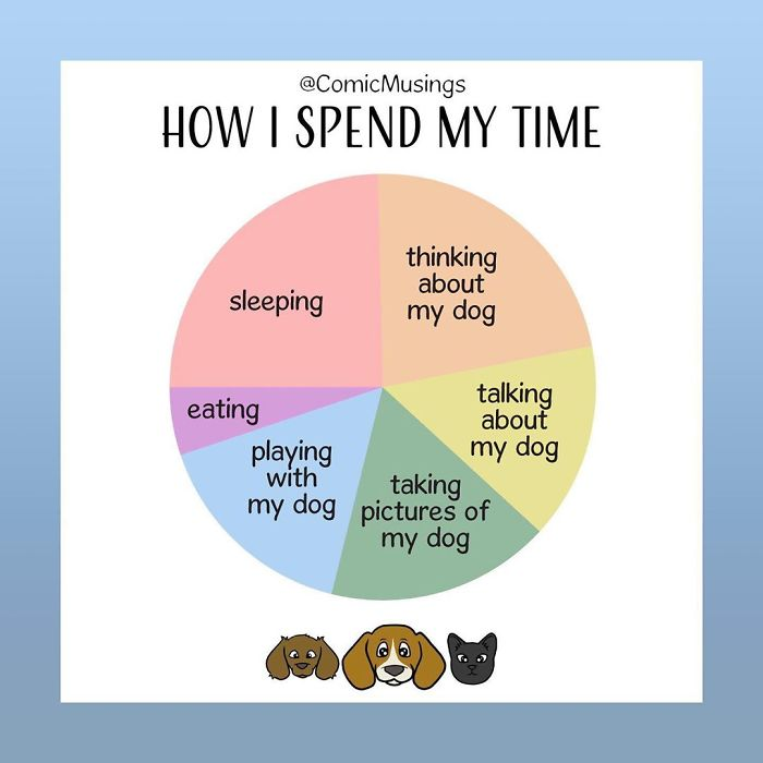 A Very Accurate Pie Chart Of How I Spend My Time