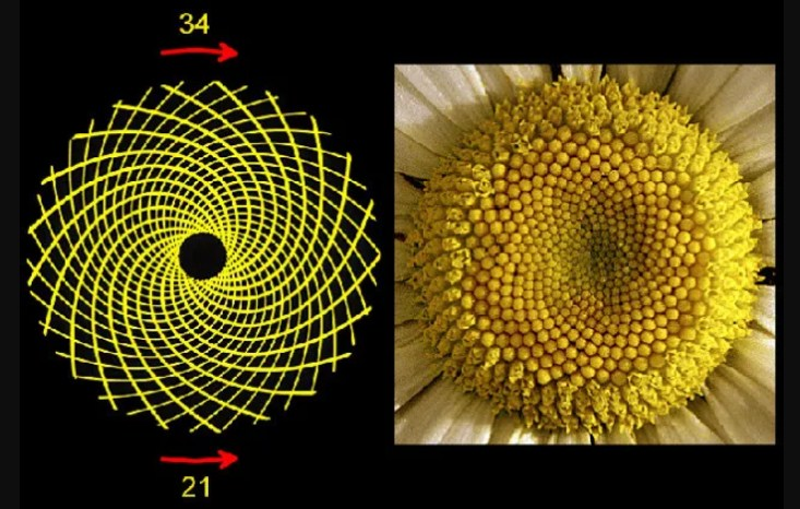 Science Mystery: Amazing Facts About The Golden Ratio You Have To Know
