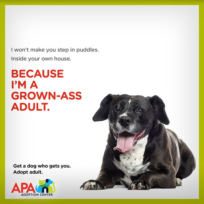 Animal Adoption Posters