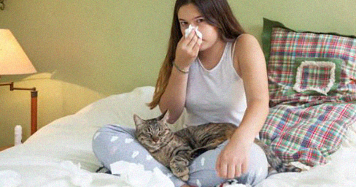 New 'Vaccine' For Cats Can Stop You From Being Allergic To Them, And It's The Most Purrfect News