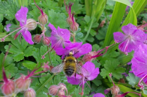 bees-5d5379587b9f5.jpg