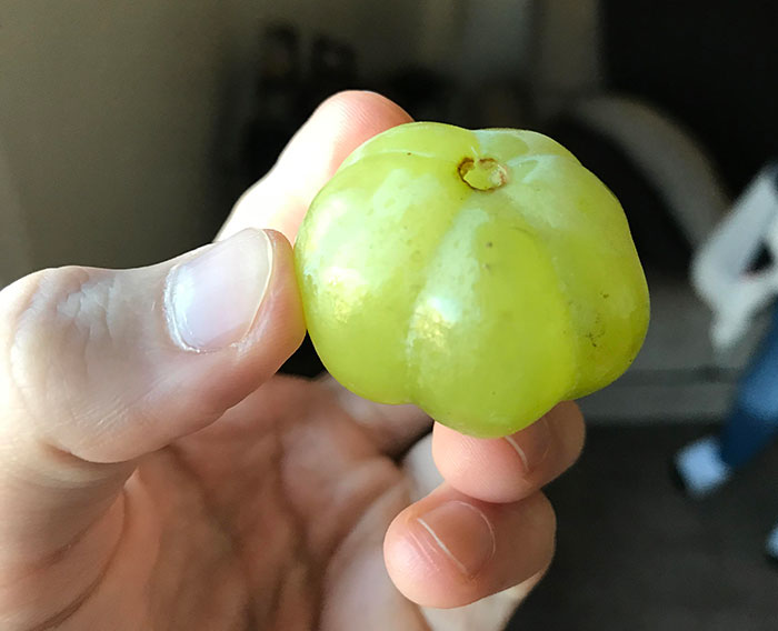 This Grape That Looks Like A Pumpkin