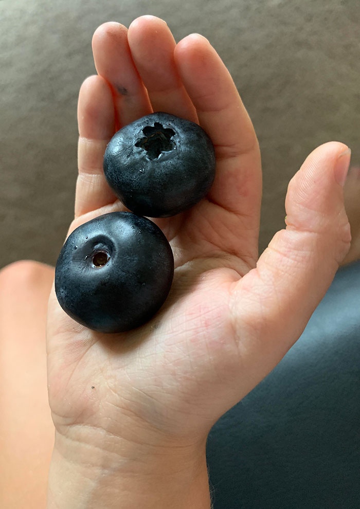 These Huge Blueberries I Found