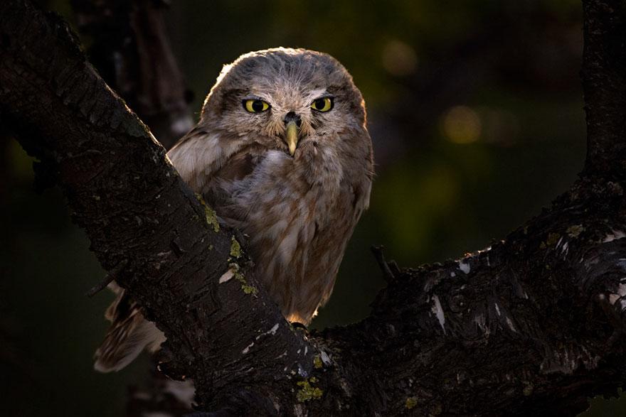 Ariel Fields - Young Bird Photographer Of The Year - Bronze