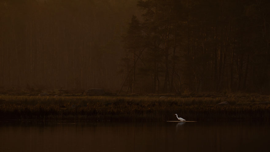 Hans Olsson - Birds In The Environment - Honorable Mention