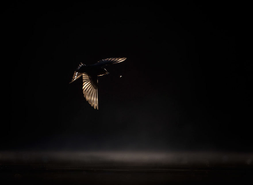 Georgina Steytler - Birds In Flight - Silver