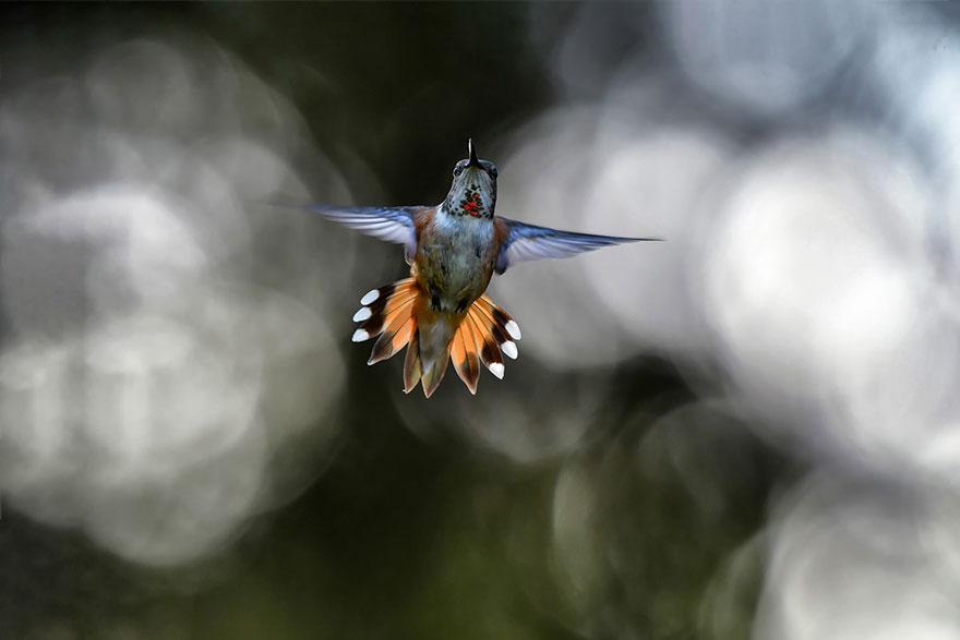 Shane Kalyn - Birds In Flight - Honorable Mention