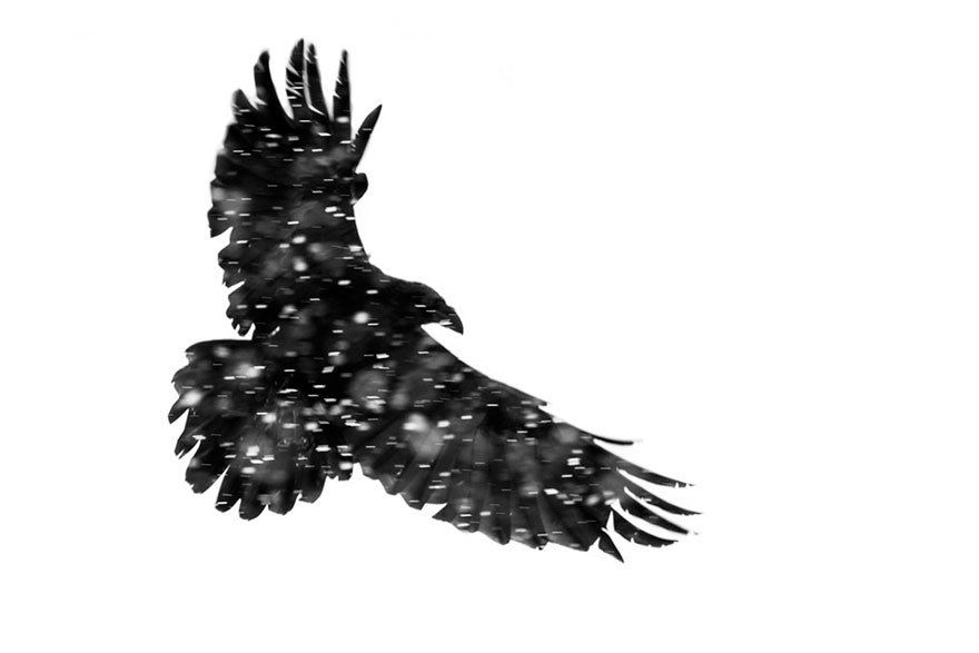 Mohammad Murad - Birds In Flight - Honorable Mention