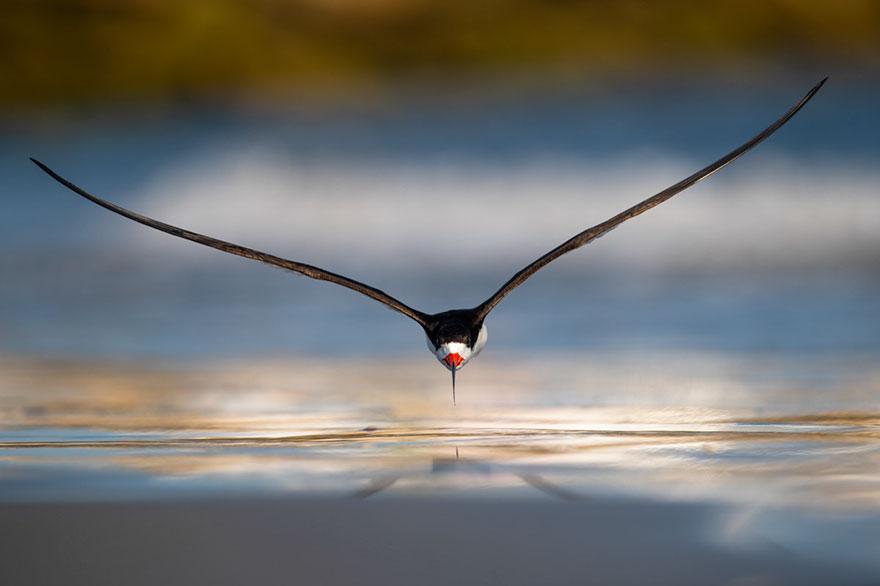 Nikunj Patel - Birds In Flight - Gold