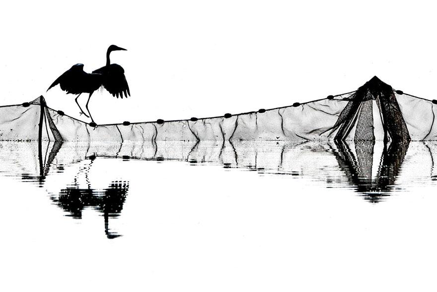 Jozsef Gergely - Bird Behaviour - Silver