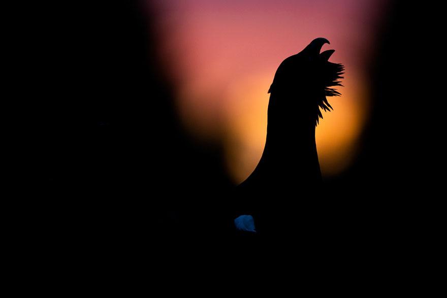 Erik Berk - Bird Behaviour - Honorable Mention