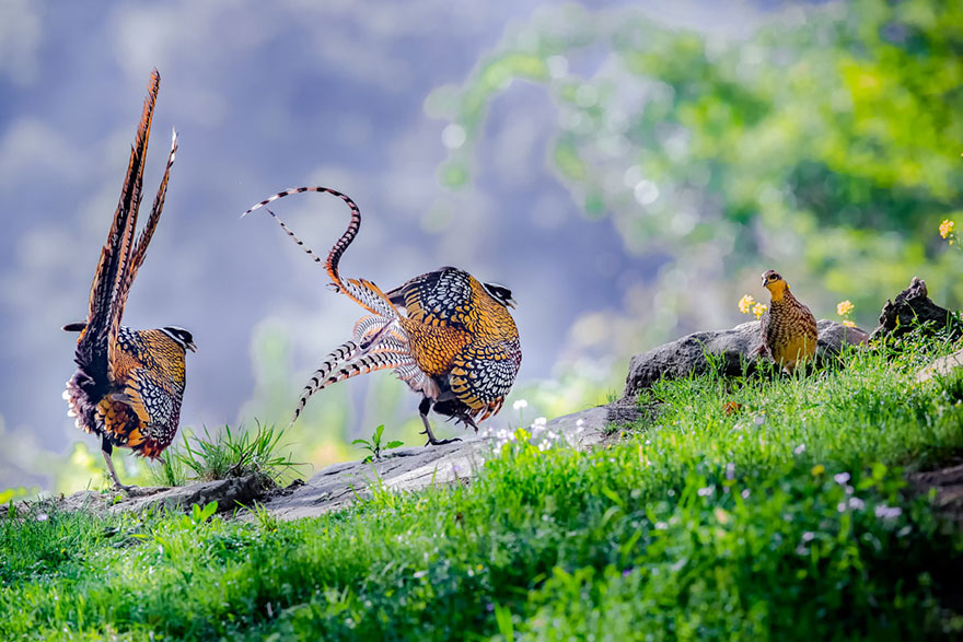 Hu Yi - Bird Behaviour - Bronze