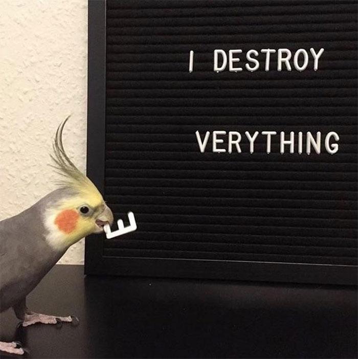 This Bird [friggin] Hates Spelling