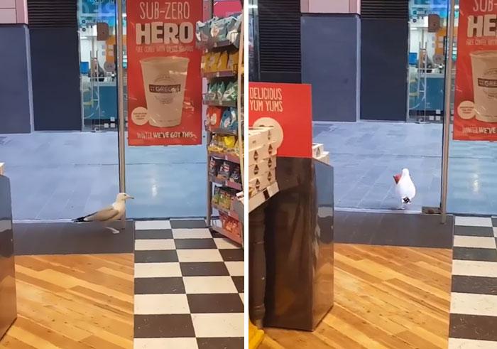 Theft Bird