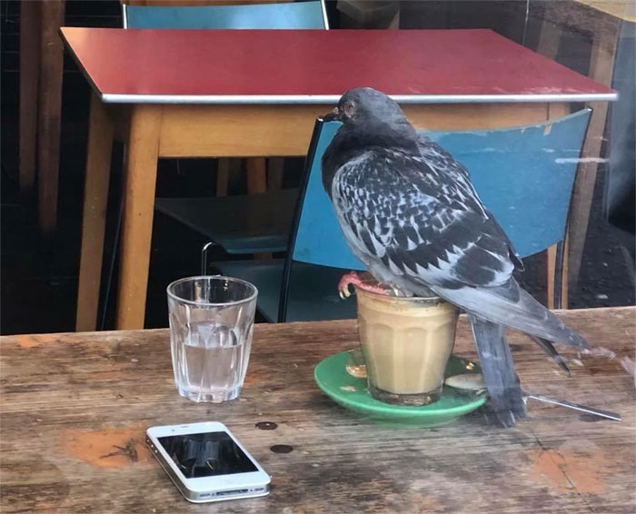 """Guess I'll Nest On This [friggin] Coffee"" - Pigeon"